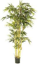 1 plante bambou