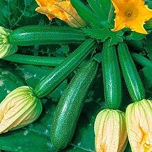 1 Sac De Graines Non-OGM Faible En Gras Plante