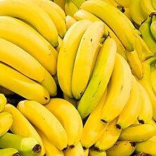 100pcs Graines De Banane Jardin Extérieur
