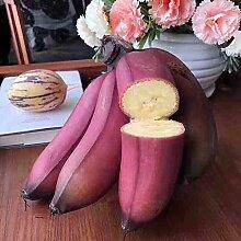10pcs Graines De Banane Birmane Bleue Jardin