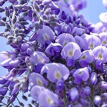 10pcs Jardin Intérieur Plante Ornementale Bonsaï