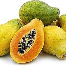 15 Pièces Papaye Graines D'arbre Fruitier