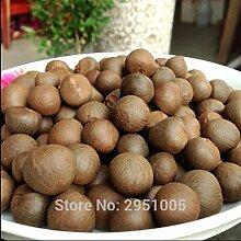20pcs/lot de thé vert chinois arbre Graines