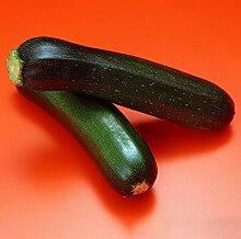 25 Pcs Coréen Vert Courgette Courgette Graines