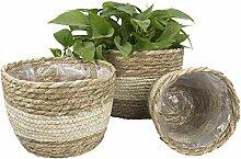 3 pièces ensemble panier de plantes tissées pot