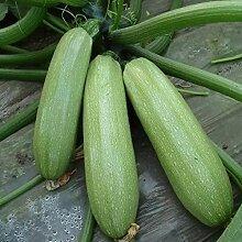 30pcs Graines De Courgette Plante De Légumes