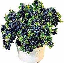 50 Pcs Blueberry Arbre Graine Fruit Myrtille