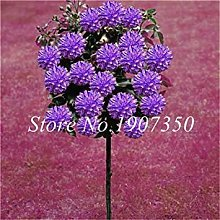 50 PcsColorful Dahlia Fleur DahliaOutdoor Arbre