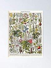 Adolphe Millot - Plantes Medicalines Une Affiche