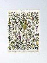 Adolphe Millot - Plantes Médicaminales B Affiche