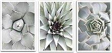 Affiches de toile botanique succulentes Art