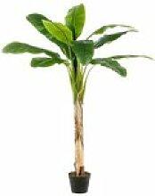artplants.de Faux bananier Bagheera, 150cm - Arbre