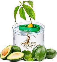 AvoSeedo - Bol en plastique Evergreen
