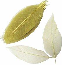 Baoblaze 100 Pièces Feuilles Naturelles Feuille
