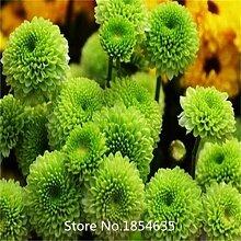 Blanc: Plante De Jardin 100 Pcs Graines De
