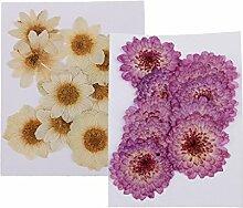 Bonarty 20 Pièces Herbier de Plantes de Fleurs