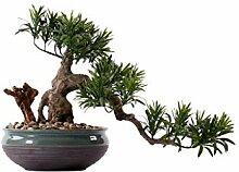 Bonsaï Artificiel Chinois faux bonsai en pot de