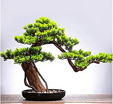 Bonsaï artificiel Simulation chinoise Plantes