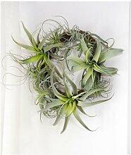 Bulbosa – fausse plante en coton succulente,