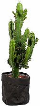 Cactus et plante grasse – Euphorbe cactus en un