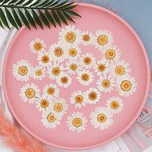 Cadre de fleur sèche gaufrage en chrysanthème