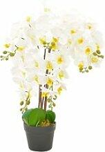 Chic décorations gamme saint john's plante