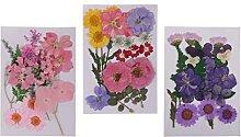 chiwanji 3 Pack de Fleurs Séchées Pressées