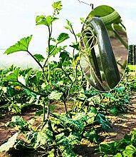 Cioler Seed House - 10 Pièces Graines De