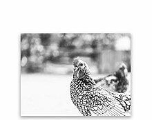 Coq noir blanc photographie affiche toile peinture