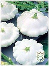 Crème anglaise Courgette blanche Sélection