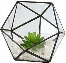 Demi-boule en verre terrarium   Plante