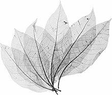 dh-7 50 pièces Magnolia Squelette Feuille