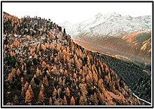 DOAQTE Forêt Arbre Montagne Route Plante Paysage
