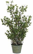 Europalms 82600132 Arbuste Sempreverde 120 cm,