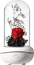 Evazory lampe de parfum de fleur éternelle pour