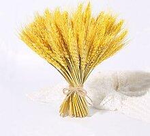 Fleurs naturelles séchées en vrai blé 23cm,