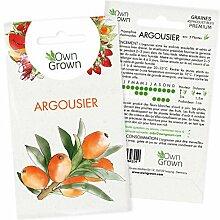 Graines d'Argousier : Kit semences