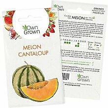 Graines de Melon Cantaloup Charentais: Semences de