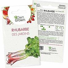 Graines de rhubarbe, variété Rhubarbe des