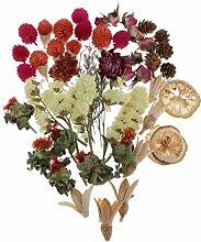 harayaa Sachet de Fleurs Séchées Pressées
