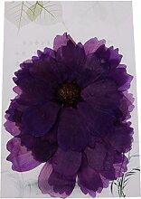 Harilla Variété de Feuilles de Fleurs Séchées