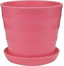Hermione Hosmer Pot de Succulent Plastique avec