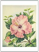 Hibiscus Rose, Hawaii de Ted Mundorff c.1940s -