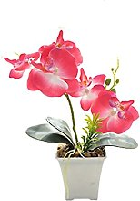 Home textile decoration® Phalaenopsis, plante