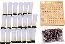 Hongzer Kit d'élevage de Reine, Kit de Coupe