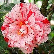 . Hot 50PCS / Sac Camélia Plante Jardin Fleur