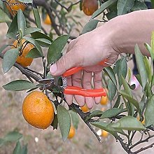 HTDHS Ciseaux d'orange en Acier Inoxydable