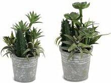Jardinage distingué pot cactus