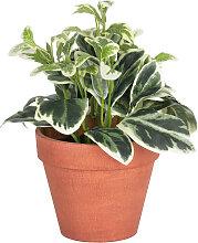 Kave Home - Plante artificielle Aucuba