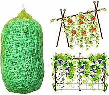 KeKeandYaoYao Jardin Légumes Arbre Fruit Plante